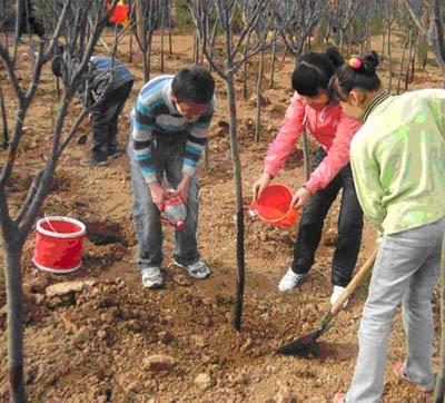 石燕湖植树活动