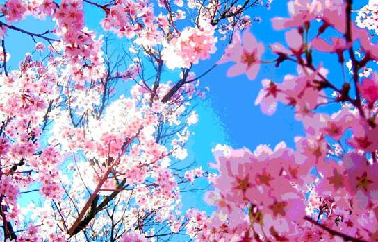"""最美人间三月天,石燕湖""""赏花踏青""""欢迎您"""