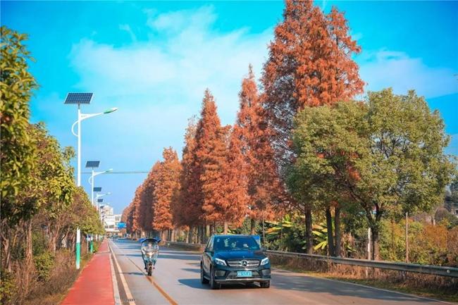 这里的红水杉惊艳了整个长沙!陪你享尽秋冬风情!