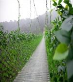 石燕湖—藤桥