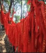 石燕湖五子登科树