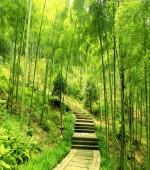 竹林趣乐园