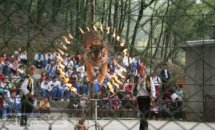 大型动物表演