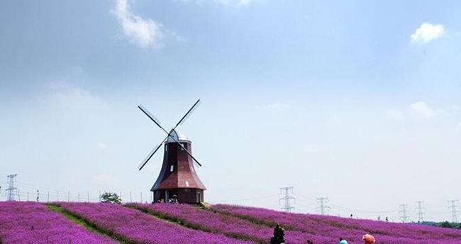 长沙风车节